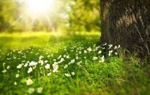 Weitere mögliche Allergien wie gegen Sonnenlicht.