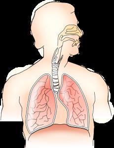 Wie die Atmung im Körper abläuft.