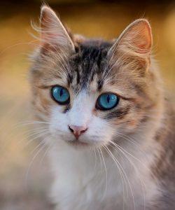 Wie die Katzenallergie behandelt werden kann.