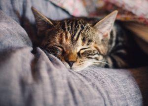 Allergien auf Katzen werden immer häufiger zum Problem.