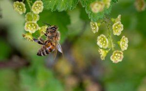 Was genau sind Pollen-Allergien?