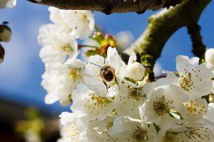 Tipps bei einer Pollenallergie