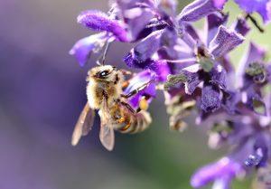 Was eine Pollenallergie verschlimmert