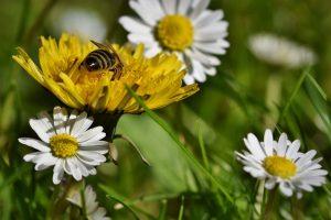Was man bei einer Pollenallergie beachten sollte