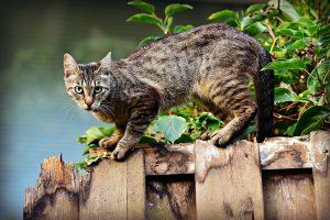 Was bei einer Allergie gegenüber Katzen hilft.
