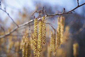 Wie man Pollen effektiv meiden kann.