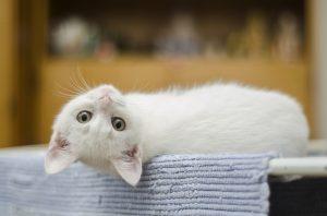 Allergie gegenüber Katzen, was man beachten sollte.