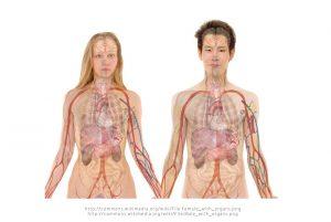 Die Funktion der Lunge