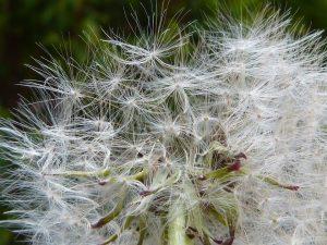 Allergien können natürliche und auch anorganische Auslöser haben.