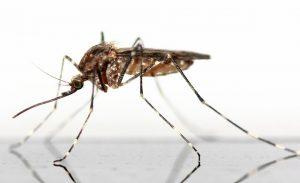 Mückenstichallergie, was man beachten sollte.
