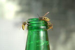 Wie man sich richtig verhält, wenn Wespen anwesend sind oder es zu einem Stich kommt.