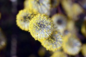 Mit dem Pricktest können Pollen-Allergien nachgewiesen werden bzw. vorhandene Sensibilisierungen.