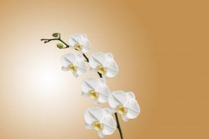 Orchideen sind schön anzusehen, können, aber zu Allergien führen.